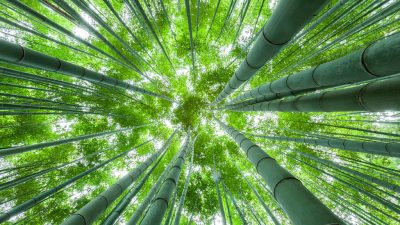 The Mindset Your Company Needs to Grow Organically